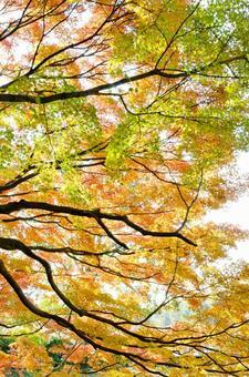 Autumn scenery 6