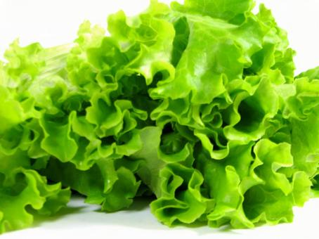 Fresh Leaf Lettuce Up