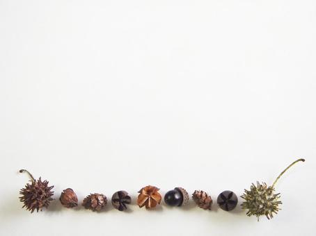 Decorative ruling of tree nut