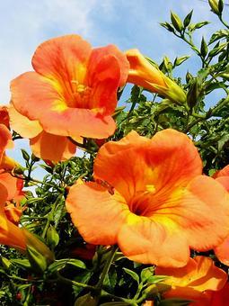 오렌지와 하늘의 대비