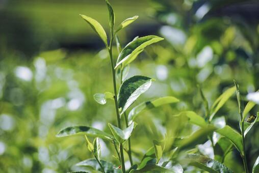 싱싱한 잎