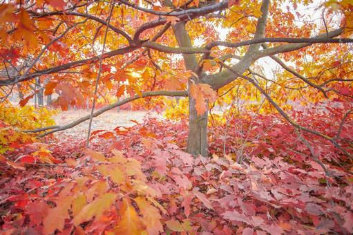 Autumn leaves trees 34