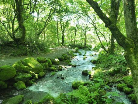 Green Kitanizawa mountain stream