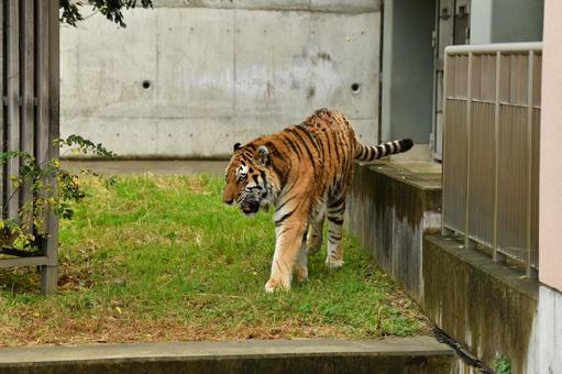 Zoo 14