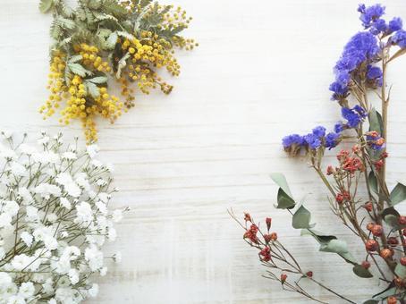 花卉背景含羞草和陰霾草贓物