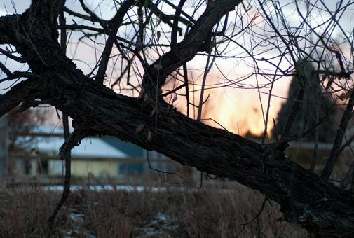 Winter trees in winter 18