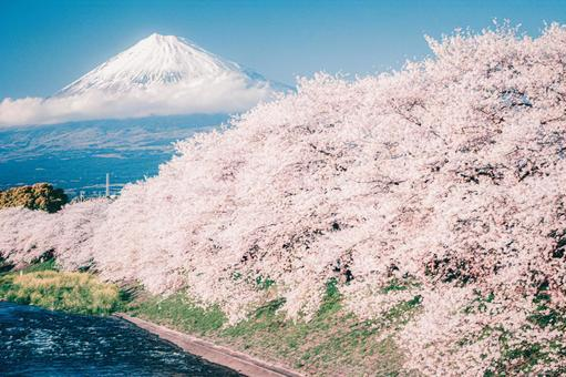 Spring river, cherry blossoms and Mt. Fuji wallpaper background