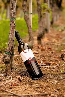 Vine and wine 1
