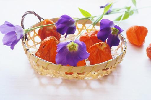 Hozuki and purple flowers