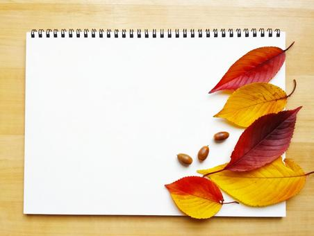 Sketchbook on the desk and background of fallen leaves and acorns 0514