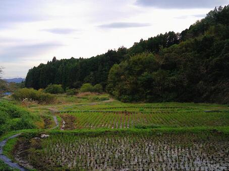 마을의 가을