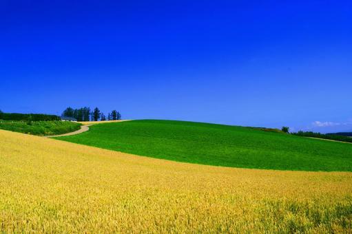 Country landscape of Summer Biei in Hokkaido