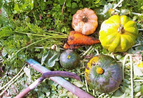 가을의 수확 호박 · 당근 ②