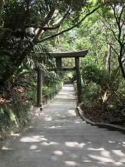 계단 토리있는 계단 숲