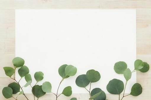 Eucalyptus frame