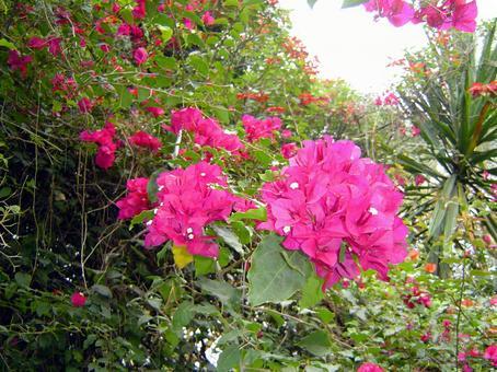 ケニアの花