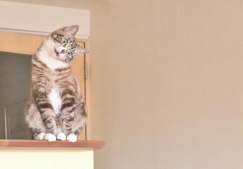 말하는 호랑이 고양이의 표정