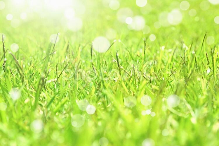キラキラの芝生の写真