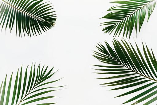 For background image and texture material palm tree palm tree leaves margin copy space white background 6