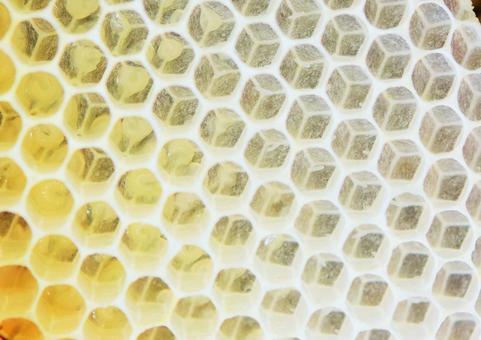 Bee Natural Nest Nectar Immunity Beehive Larva Egg Texture Copy Space Beauty Health Whitening Longevity