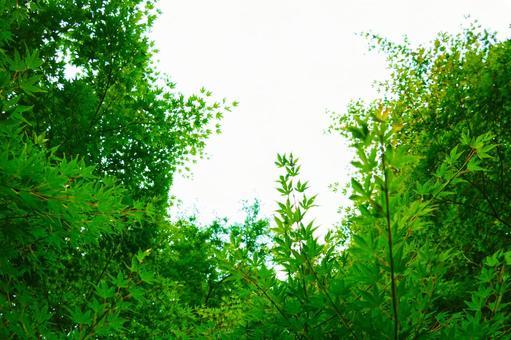 Sunbeams green