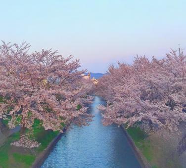 벚꽃 꽃길
