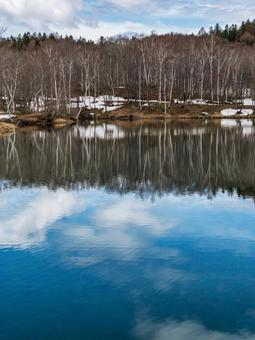 Birch forest and sky reflected on the surface of the water
