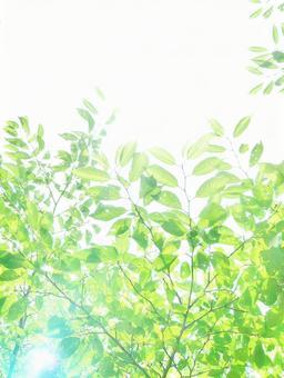 Sunbeams Glittering Sunbeams Sunbeams Green Green Shine