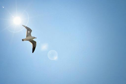 푸른 하늘과 갈매기