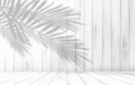 White room and shadow of leaves on the wall