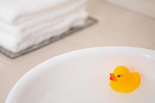목욕 오리