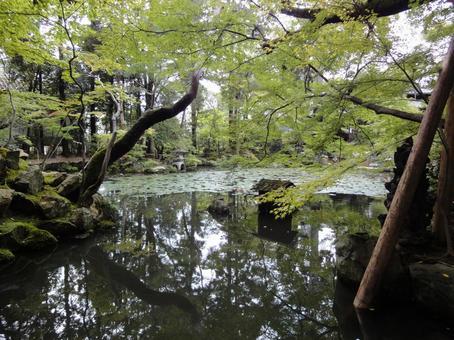 日本花園池塘