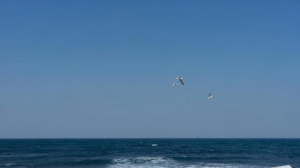 괭이 갈매기의 비행 바다