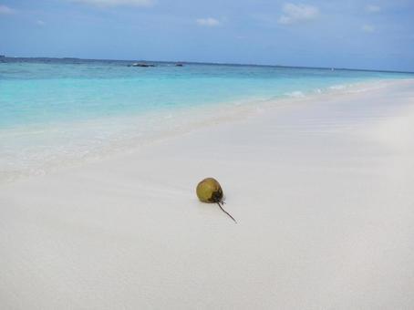 푸른 바다에 야자 열매 하나