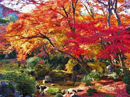 Hogon-in Autumn leaves in late autumn