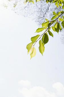 빛과 잎 2