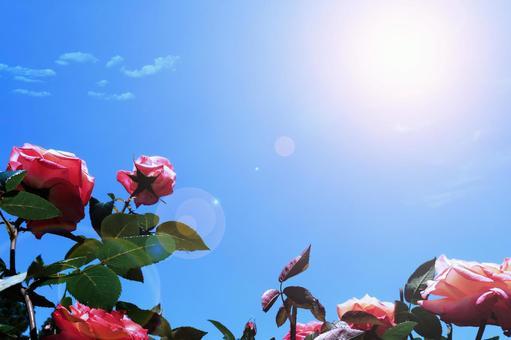 紅玫瑰與藍天 | 初夏的治愈意象