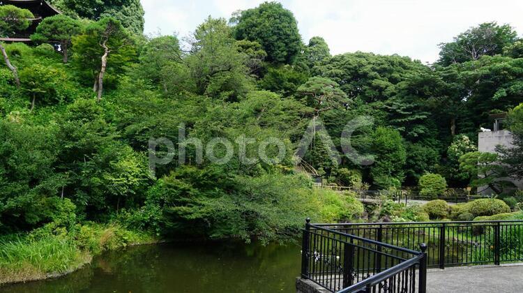 ホテル椿山荘東京 日本庭園 の写真