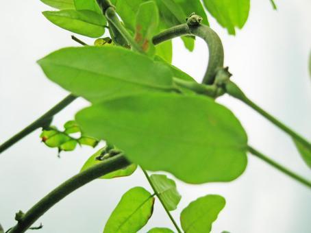 녹색 덩굴 잎 6