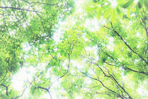 Background material for refreshing summer sunbeams with beautiful greenery