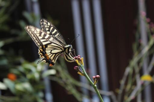 나비의 산란