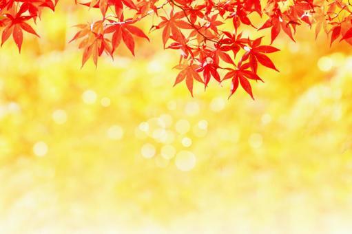 Maple and autumn sunshine background