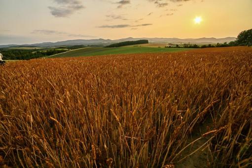 비 에이 赤麦 언덕의 황혼