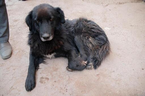 마추피추 유적 입구에 있던 개