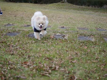 狗在田野上奔跑