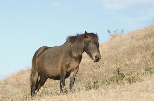 Wild horse 8
