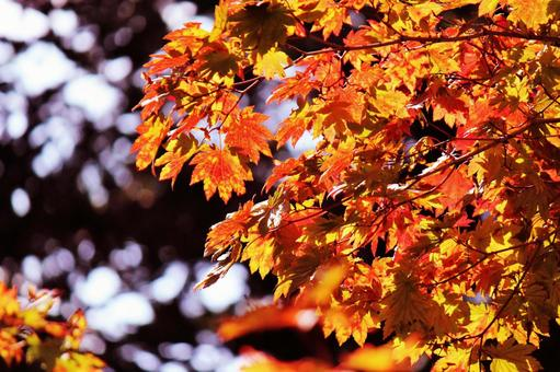Autumn leaves on a sunny day ④