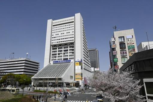 푸른 하늘과 나가노와 벚꽃