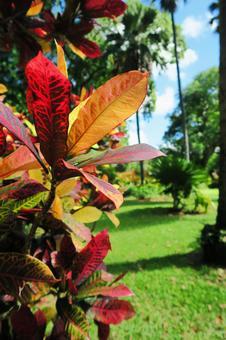 Hawaiian Landscape (93) Foster Botanical Garden
