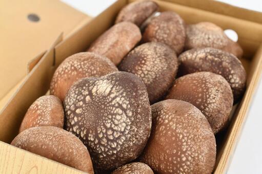 생 표고 버섯 (박스 포장)